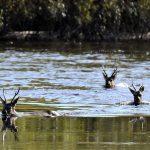 10., 17. und 24.6.: Terra Mater: Amur – Asiens Amazonas